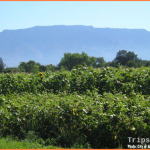 Albuquerque New Mexico Travel Guide_18.jpg