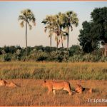 Botswana Travel Guide_3.jpg