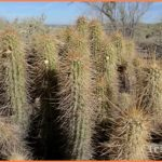 Scottsdale Arizona Travel Guide_8.jpg