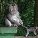 MONKEY JUNGLE BALI_4.jpg