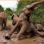 Mud Bath with Elephants_9.jpg