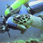 SEA TURTLE ISLAND APO ISLAND PHILIPPINES_10.jpg