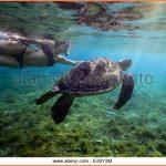SEA TURTLE ISLAND APO ISLAND PHILIPPINES_16.jpg