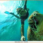 SEA TURTLE ISLAND APO ISLAND PHILIPPINES_20.jpg