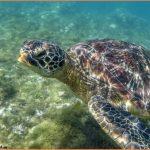 SEA TURTLE ISLAND APO ISLAND PHILIPPINES_21.jpg