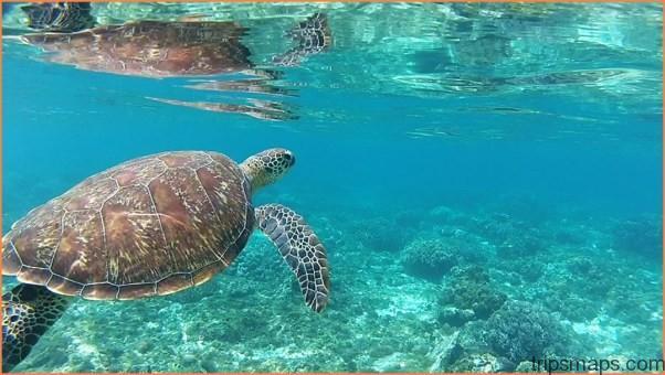 SEA TURTLE ISLAND APO ISLAND PHILIPPINES_8.jpg