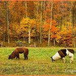 Fall Foliage  Vermont Tourism - Picture of Vermont, United States