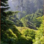 Top 5 Things to Do in Oregon's Cape Perpetua