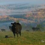 West Virginia Beef Industry Council