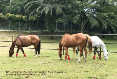 trinity of horses 2