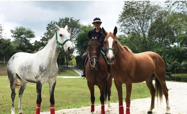 trinity of horses