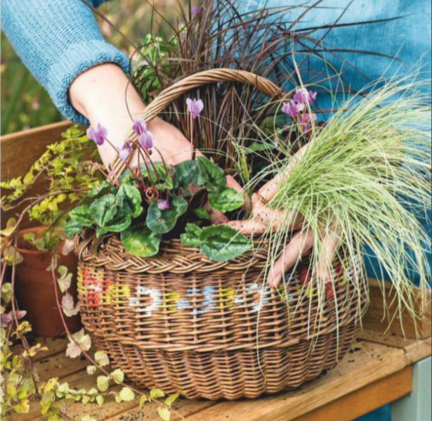 a hanging wicker basket overflowing with late flowering perennials and decorative grasses brings interest to the autumn garden