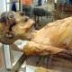 mummies from ancient egypt on vienna